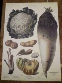 Botanische Prent Vilmorin -The Vegetable Garden- Groente Art Print nr09