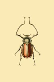 Kaart Ansichtkaart Kever - Beetle