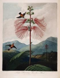 Kaart Ansichtkaart Bloem - Flower