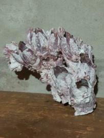 Zeepokken Zeepok Roze Zeetulp - Grote Cluster 26 cm