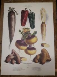 Botanische Prent Vilmorin -The Vegetable Garden- Groente Art Print nr27