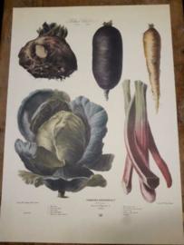 Botanische Prent Vilmorin -The Vegetable Garden- Groente Art Print nr11