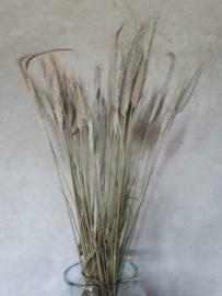 Bos Gedroogde Grassen Gerst Droogbloemen Naturel