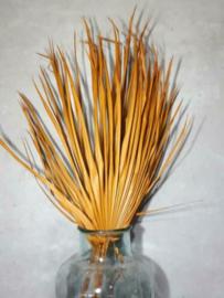 Gedroogde Droogbloemen Palmblad Palm Chamaerops Oranje 3st.