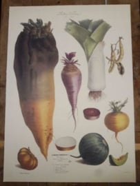 Botanische Prent Vilmorin -The Vegetable Garden- Groente Art Print nr05