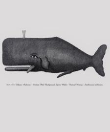 Kaart Ansichtkaart Walvis - Whale