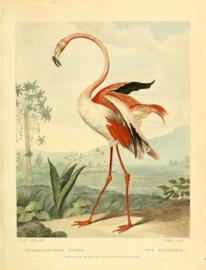 Poster Prent Flamingo