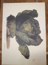 Botanische Prent Vilmorin -The Vegetable Garden- Groente Art Print nr07