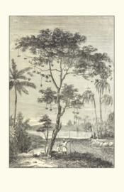 Kaart Ansichtkaart Levensboom - Tree