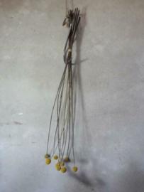 Gedroogde Bos Craspedium Bolletjes Geel Droogbloemen 70 cm