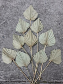 Gedroogde Droogbloemen Bos Palm Speer 10 Stuks Naturel