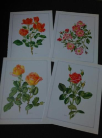 Oude Botanische Set Prenten Roos Rozen Trechslin