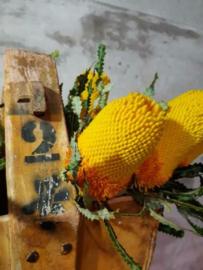 Gedroogde Banksia Prionotis Geel Droogbloemen