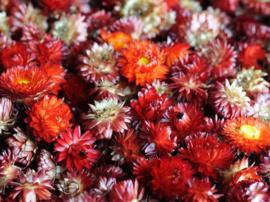 Gedroogde Bos Droogbloemen Oranje & Rood