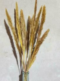 Gedroogde Mini Fluffy Pampas Grassen Droogbloemen Geel