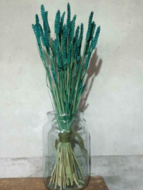 Gedroogde Bos Tarwe Turquoise Petrol Droogbloemen