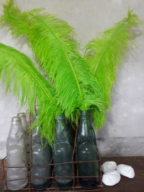 Struisvogelveer Green - Groen 60 cm