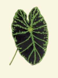 Kaart Ansichtkaart Blad - Leaf