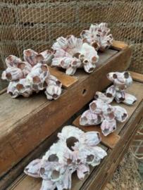 Zeepokken Zeepok Roze Zeetulp - Grote Cluster 10 cm