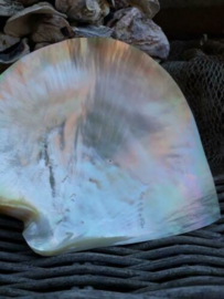 Grote Schelp Parelmoer Mother of Pearl Plate Polish Dubbelzijdig
