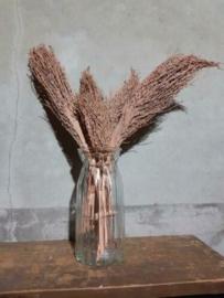 Bos Droogbloemen Gedroogde Dadeltak Palm Zalm