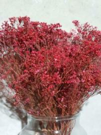 Gedroogde Bos Bloom Broom Roze Droogbloemen
