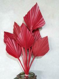 Gedroogde Droogbloemen Palmblad Palm Speer 5st Rood