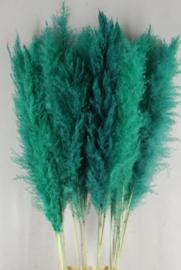 Gedroogde Pampasgras Pampas Grassen Droogbloemen Turquoise