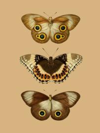Kaart Ansichtkaart Vlinders 3 - Butterfly