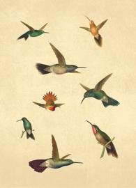 Kaart Ansichtkaart Kolibries - Hummingbirds