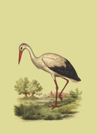 Kaart Ansichtkaart Ooievaar - Stork