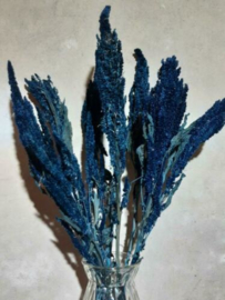 Gedroogde Bos Amaranthus Blauw Droogbloemen