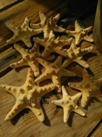 Zeester Pilippine 5-7 cm 10 stuks