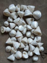 Troca Pearlized Mini Schelpen 1-3 cm 50 stuks