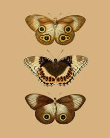 Poster Vlinders - Butterflies