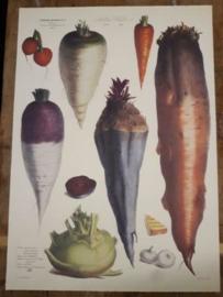 Botanische Prent Vilmorin -The Vegetable Garden- Groente Art Print nr04