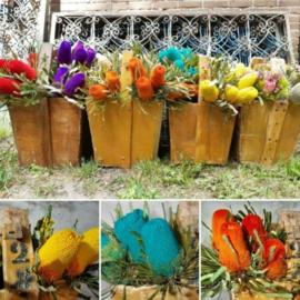 Inspiratie Droogbloemen Gedroogde Exoten Banksia