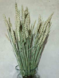 Bos Gedroogde Grassen Tarwe Droogbloemen Naturel