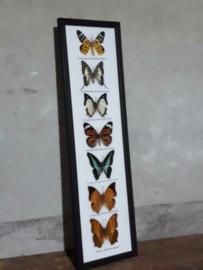 Opgezette Vlinders in Lijst - Assorti 7 Stuks