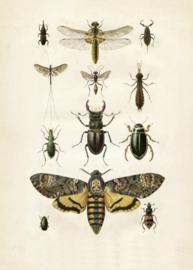 Kaart Ansichtkaart Insecten - Insects