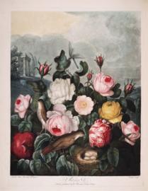 Kaart Ansichtkaart Bloemen - Flowers