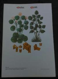 Oude Botanische Prent Bloemen en Bomen Tudor Plaat 21