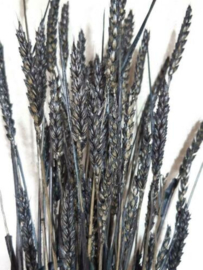 Bos Gedroogde Grassen Tarwe Droogbloemen Zwart Naturel