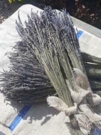 Bosje Gedroogde Lavendel Droogbloemen Lavendin Lang