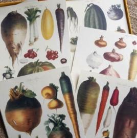 Inspiratie Oude Prenten Vilmorin The Vegetable Garden Groentes Art Print