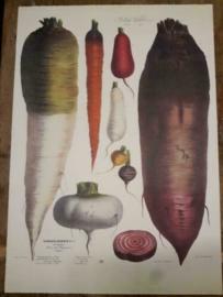 Botanische Prent Vilmorin -The Vegetable Garden- Groente Art Print nr02