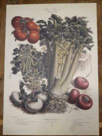 Botanische Prent Vilmorin -The Vegetable Garden- Groente Art Print nr45