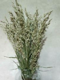 Bos Gedroogde Grassen Haver Droogbloemen Naturel