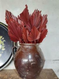 Gedroogde Droogbloemen Palmblad Palm Speer 5st Bruin
