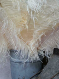 Struisvogelveer Okapari - Creme 60 cm